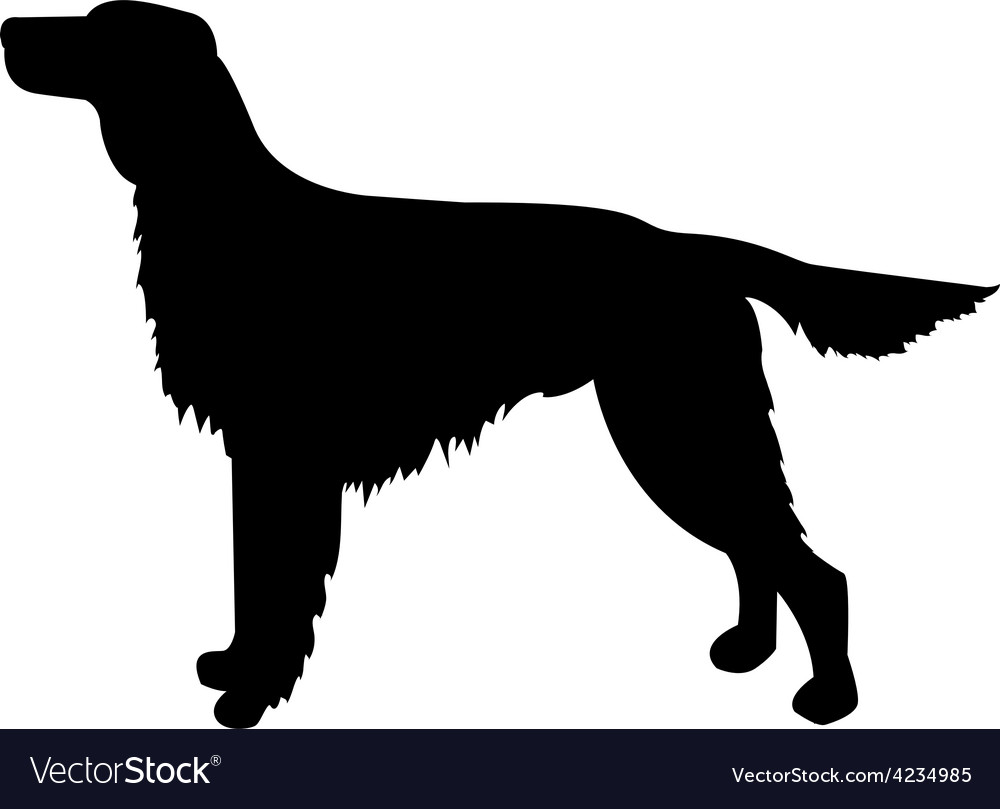 Dog silhouette irish setter vector | Price: 1 Credit (USD $1)