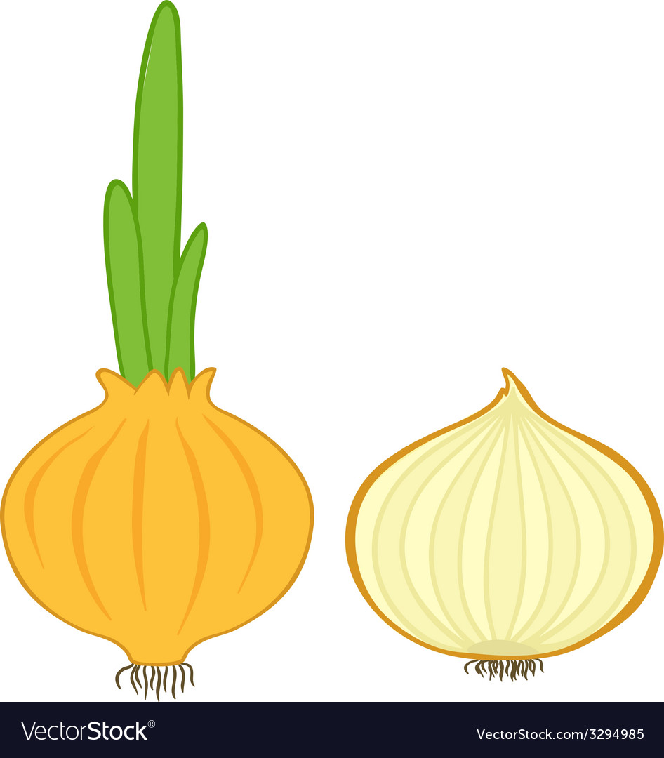 Onion and slice vector | Price: 1 Credit (USD $1)