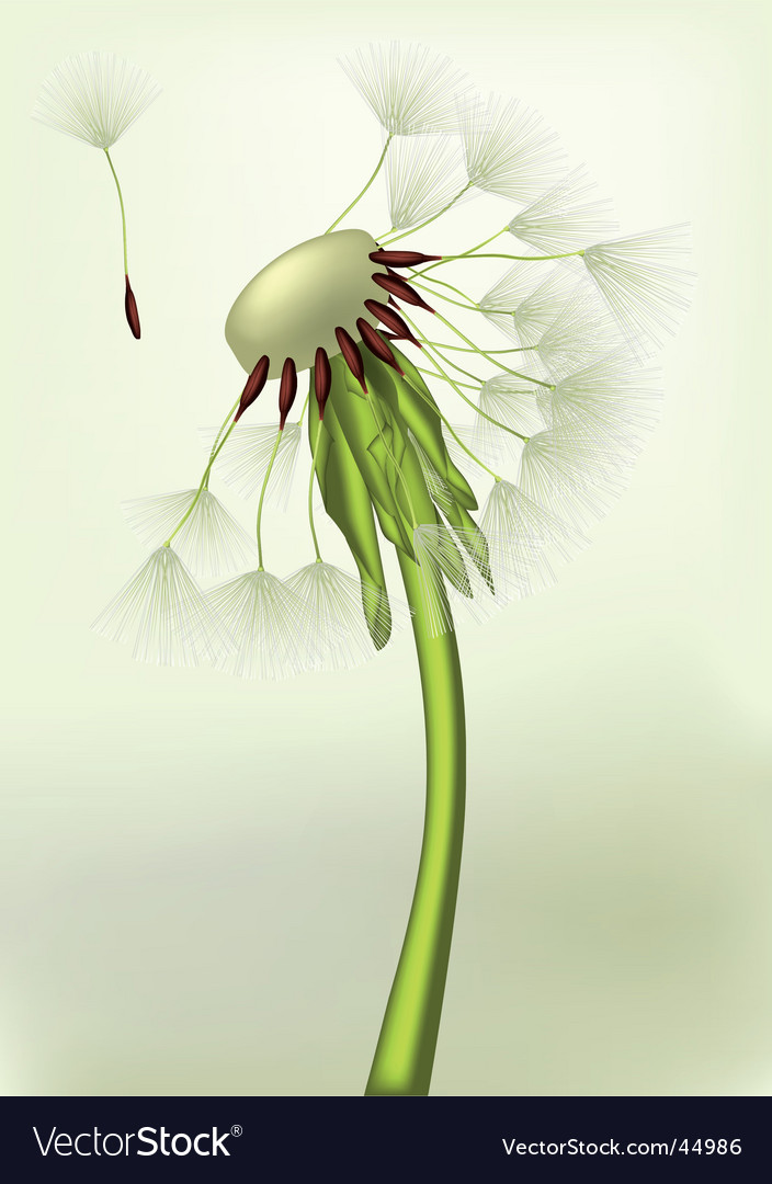 Last dandelion on a wind vector | Price: 1 Credit (USD $1)