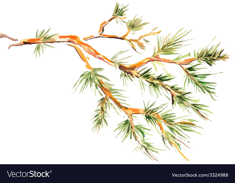 Watercolor painting - pine branch vector | Price: 1 Credit (USD $1)