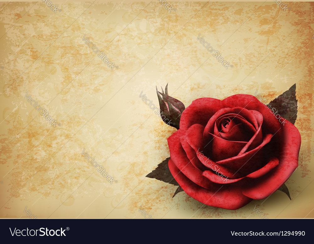 Retro background with beautiful red rose with buds vector | Price: 1 Credit (USD $1)