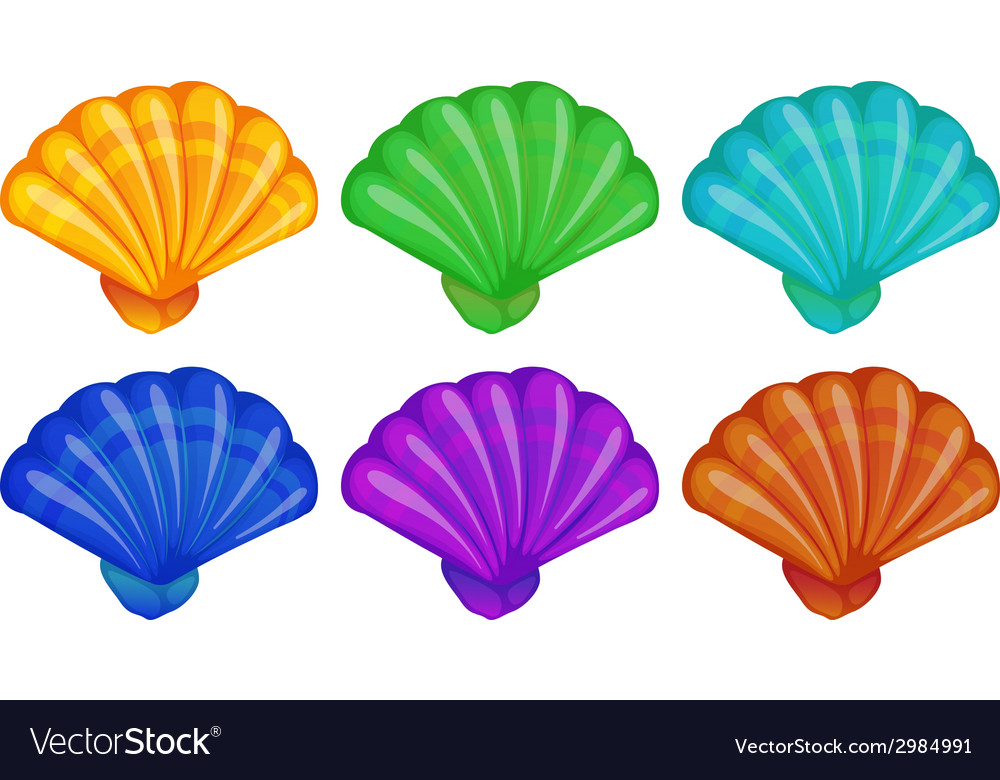 A group of shells vector | Price: 1 Credit (USD $1)