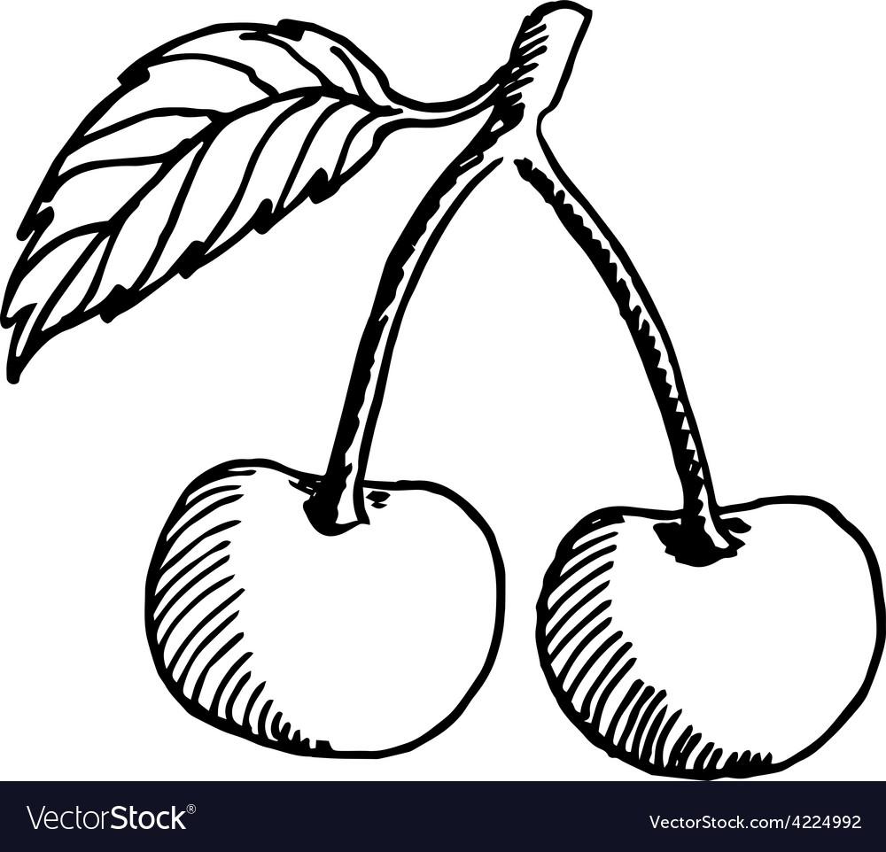 Cherry sketch vector