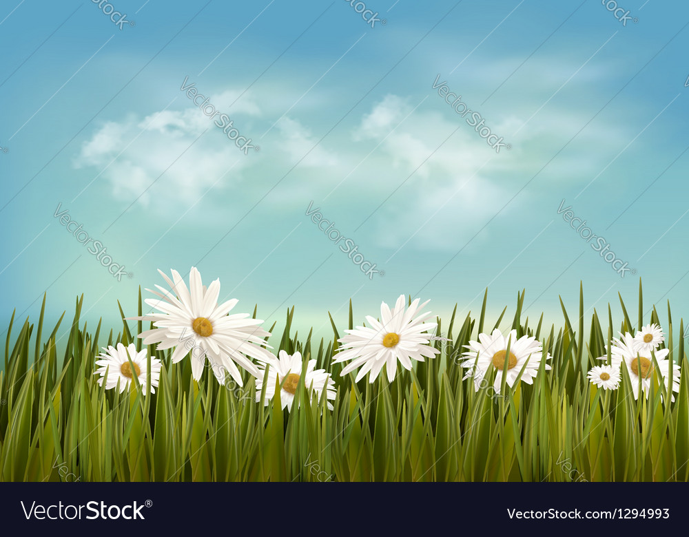 Grass with daisies under blue sky retro background vector | Price: 1 Credit (USD $1)