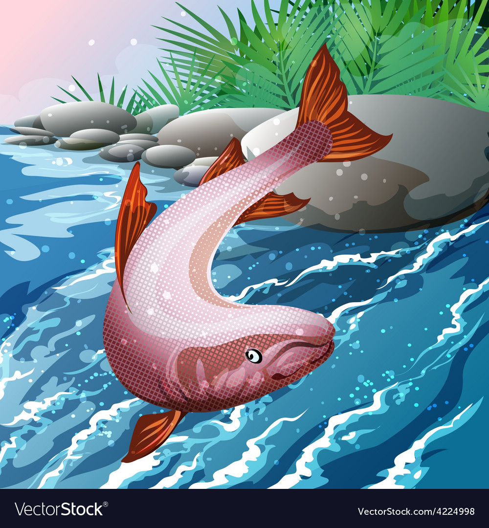 Salmon creek vector | Price: 3 Credit (USD $3)