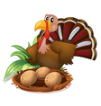 A turkey beside the nest with eggs vector