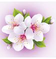 Blossoming sakura branch japanese cherry tree vector