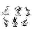 Stork heron crane and egret birds vector