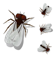 House fly vector
