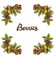 Sketch berries frame vector