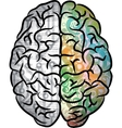 Human brain color vector