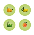 Orange grapefruit lime lemon citrus fruits set vector