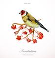 Watercolor painting wild bird on branch rowan vector