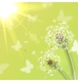 White dandelions with summer sun vector