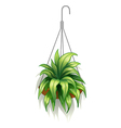 A hanging pot with green plants vector