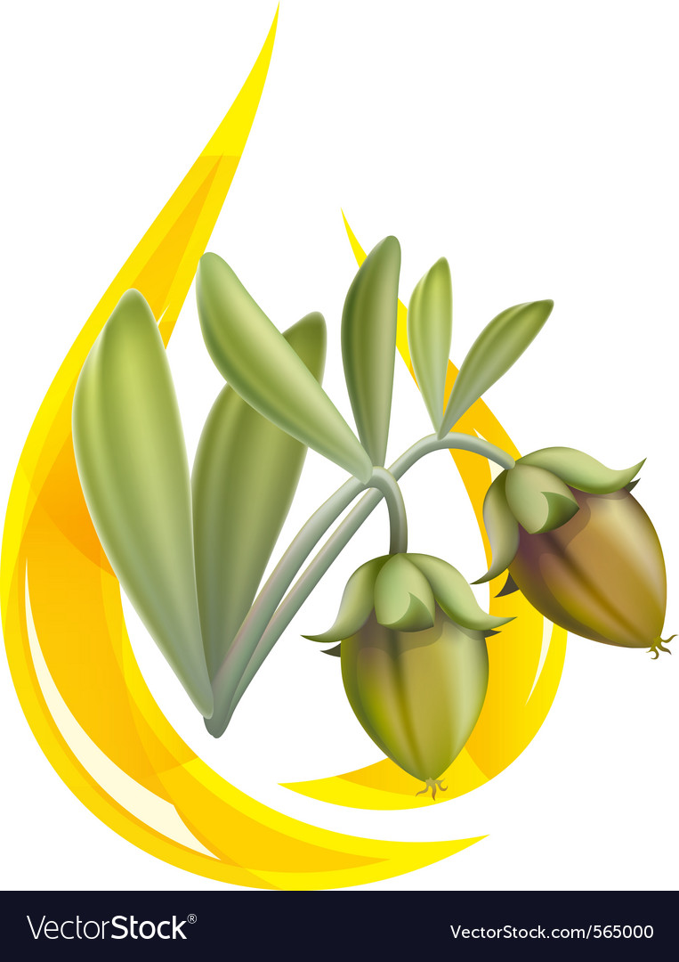 Jojoba oil vector | Price: 1 Credit (USD $1)