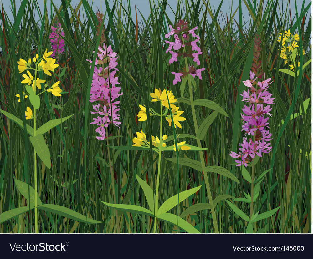 Meadow flowers vector | Price: 3 Credit (USD $3)