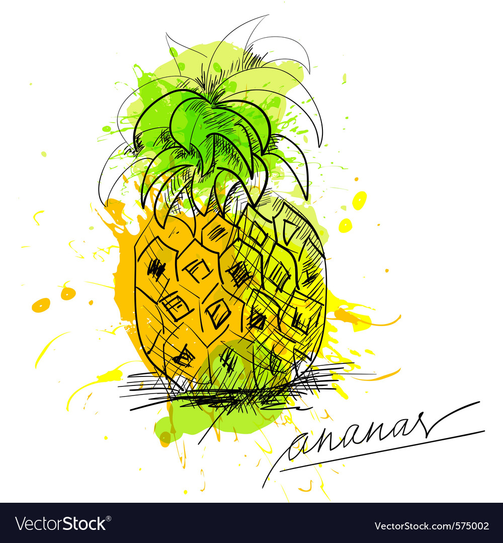 Sketch of pineapple vector | Price: 1 Credit (USD $1)