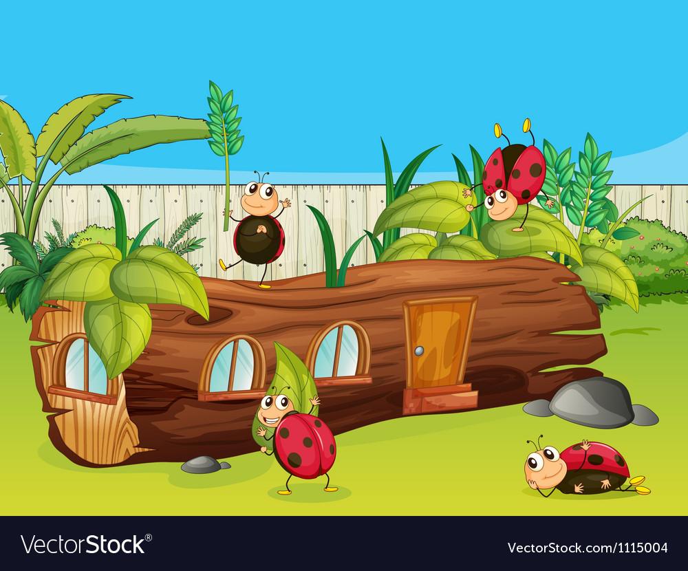 Ladybugs vector   Price: 1 Credit (USD $1)