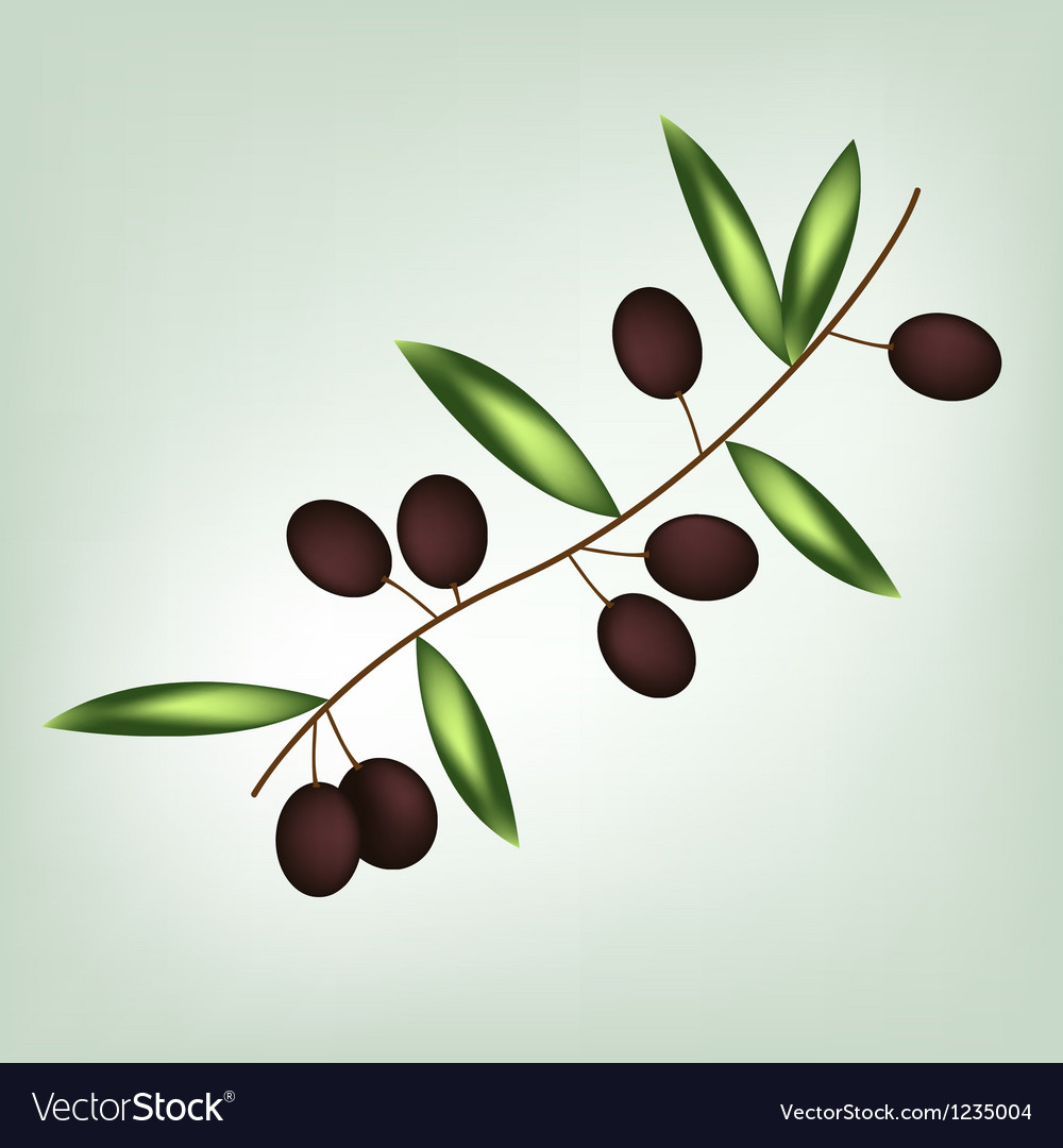 Olive brunch vector | Price: 1 Credit (USD $1)