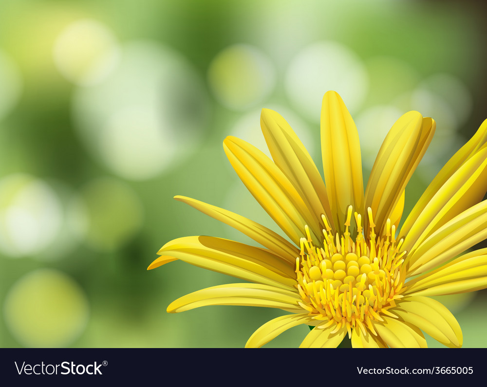 A blooming flower vector | Price: 3 Credit (USD $3)
