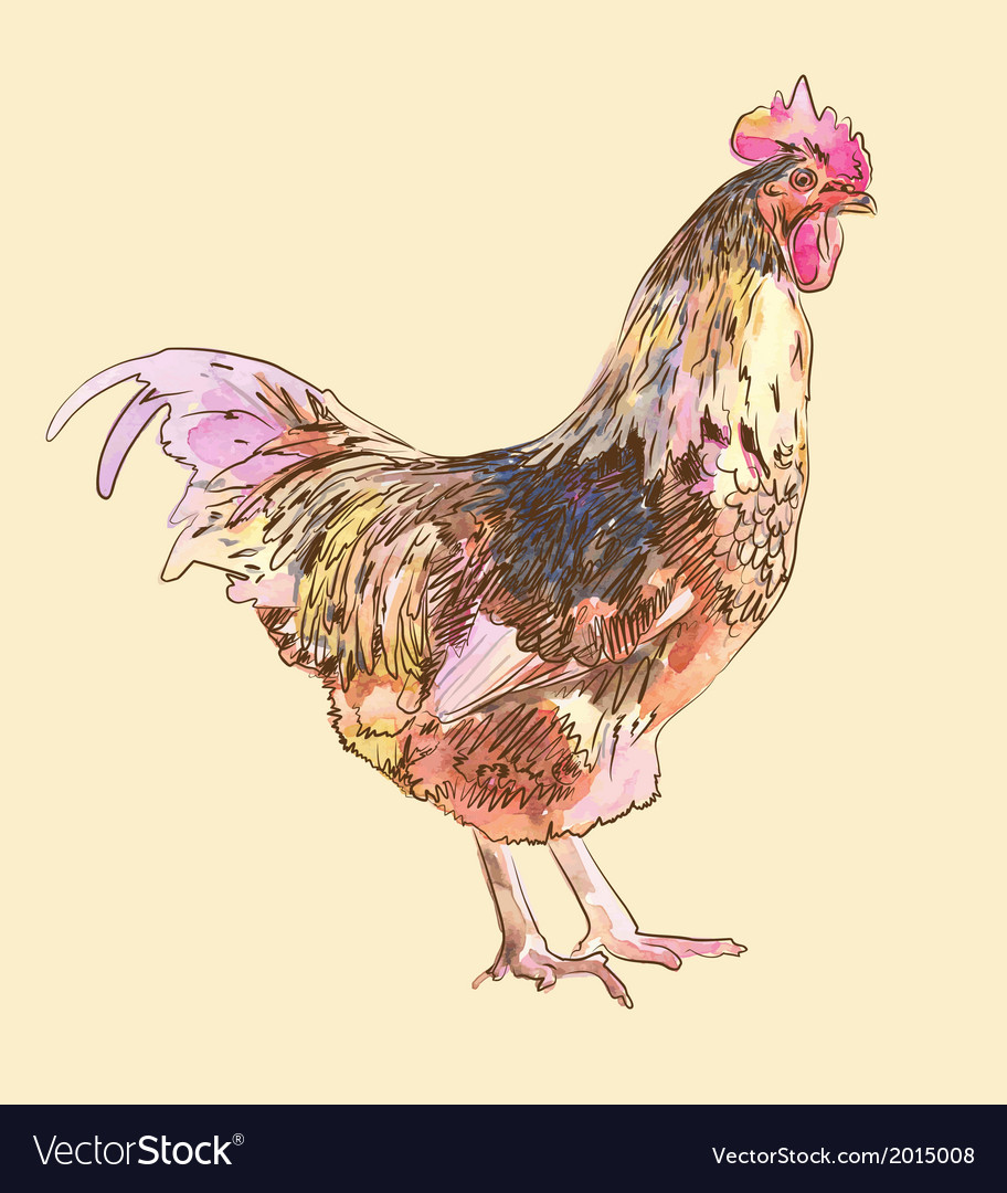 Hand draw watercolor painting sketch cock vector | Price: 1 Credit (USD $1)