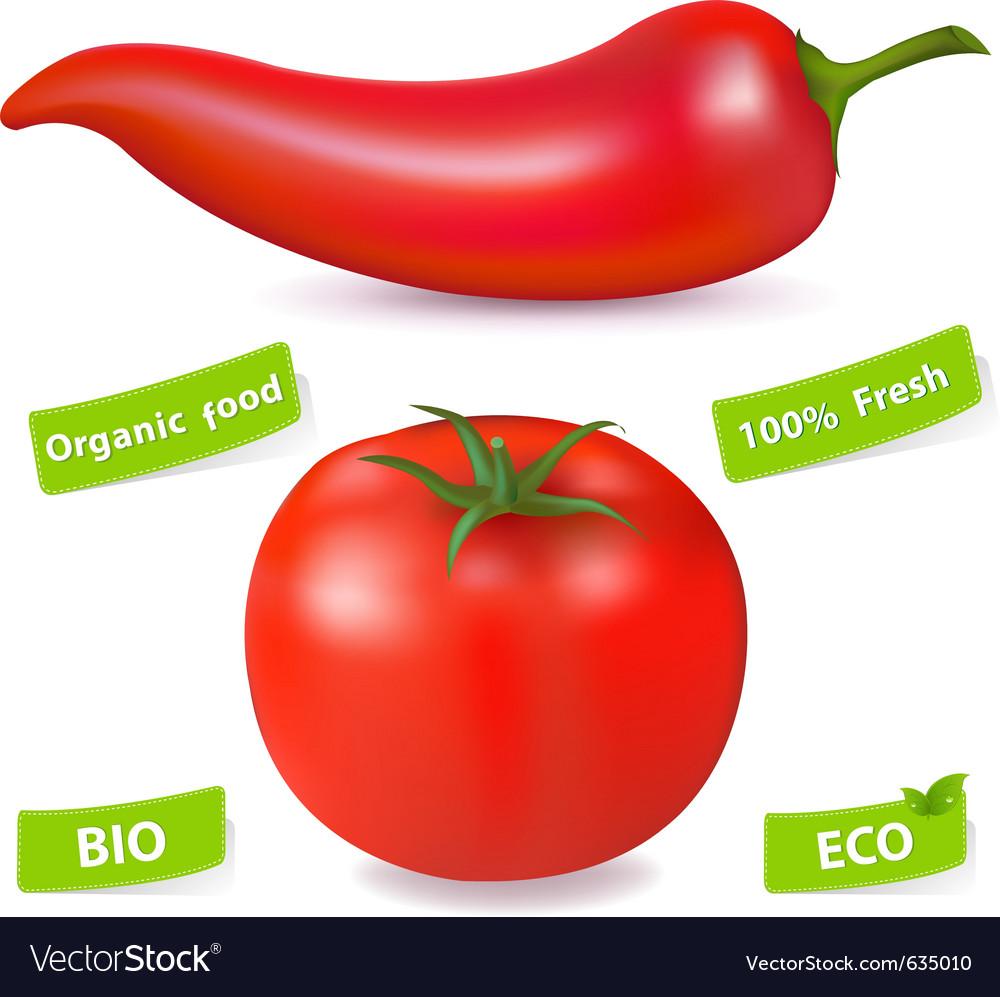 Chili pepper and tomato vector | Price: 1 Credit (USD $1)