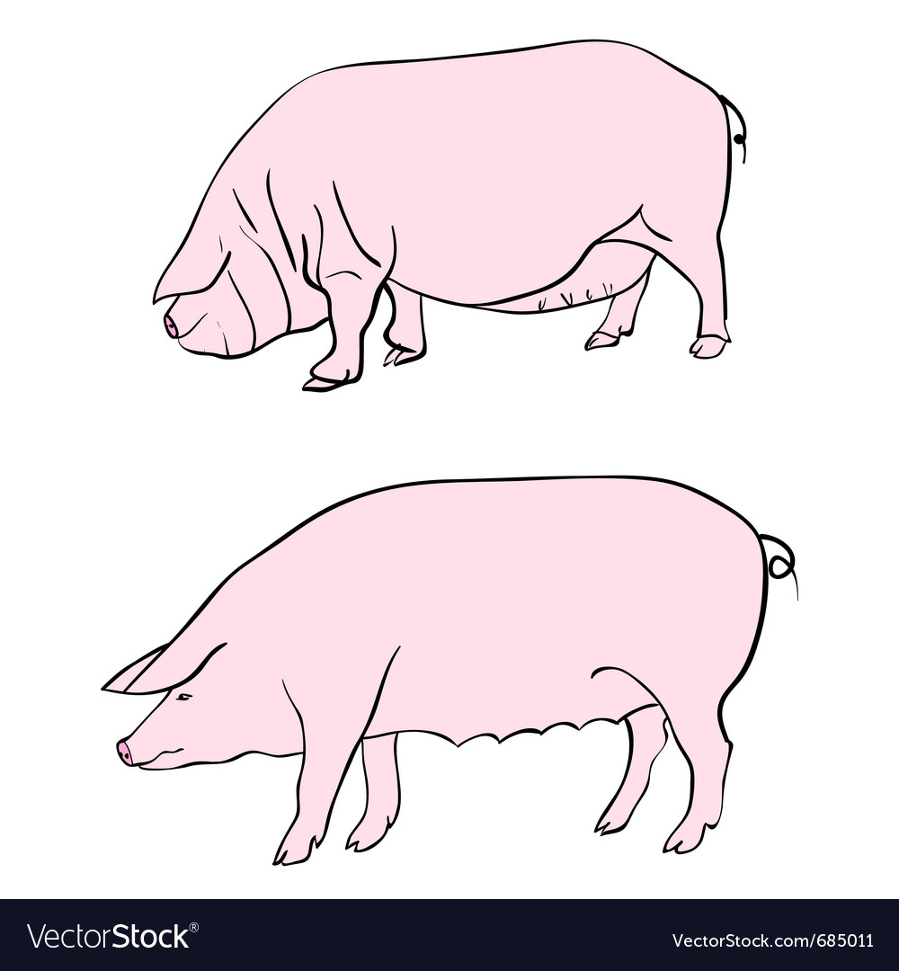 Pig drawing vector | Price: 1 Credit (USD $1)