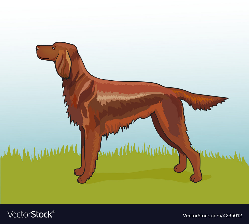 Realistic irish setter vector | Price: 1 Credit (USD $1)