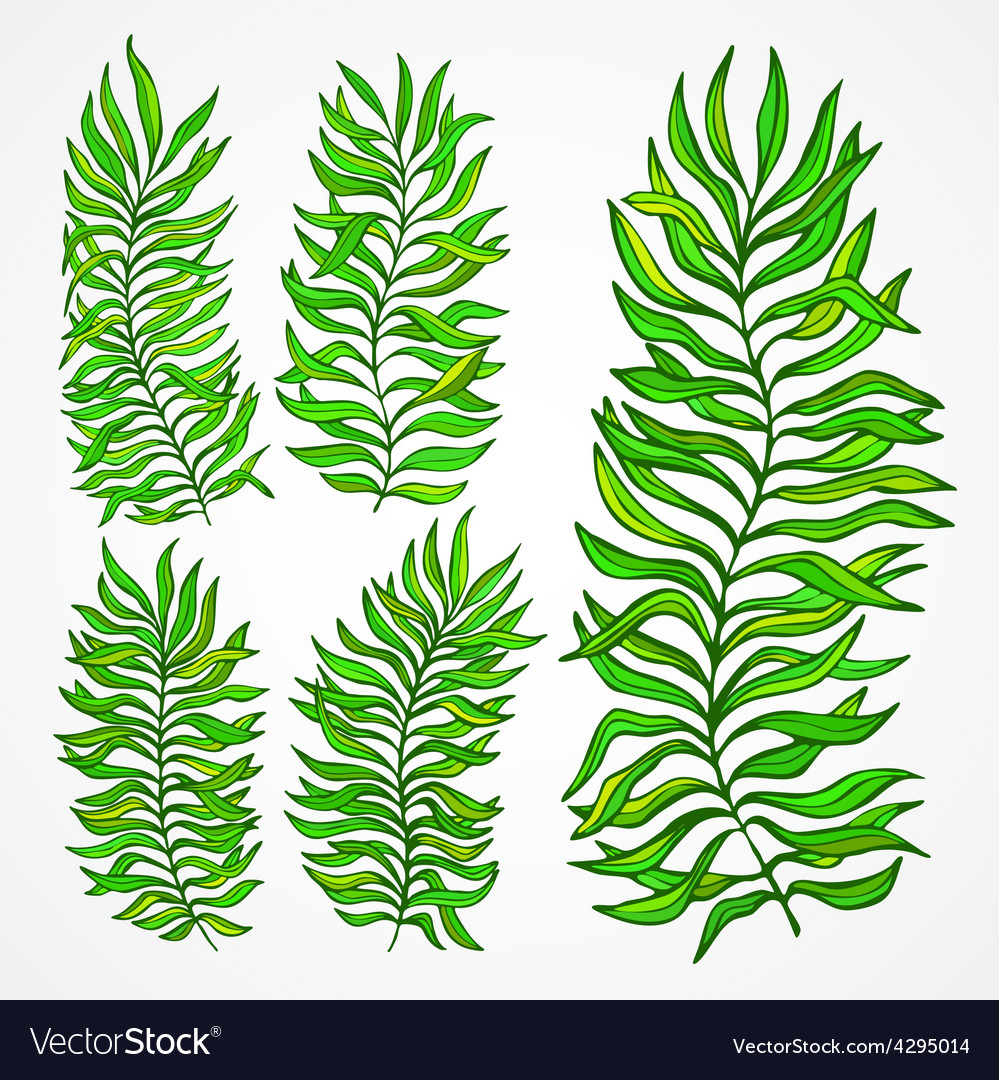 Set of exotic foliage vector | Price: 1 Credit (USD $1)