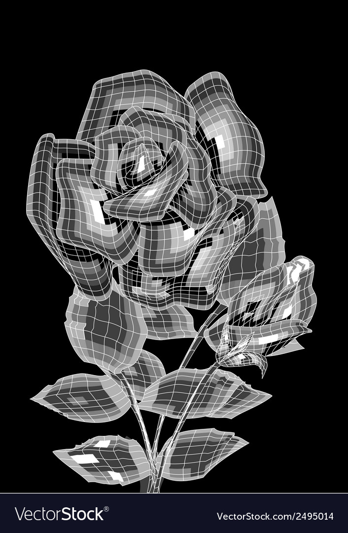 Two roses vector | Price: 1 Credit (USD $1)