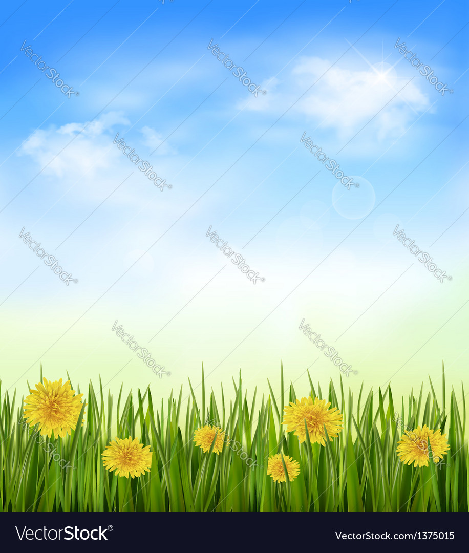 Nature background with green grass and flowers and vector | Price: 1 Credit (USD $1)