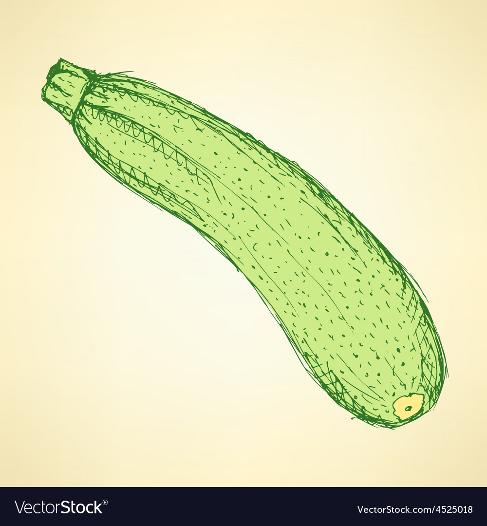 Sketch tasty zucchini in vintage style vector | Price: 1 Credit (USD $1)
