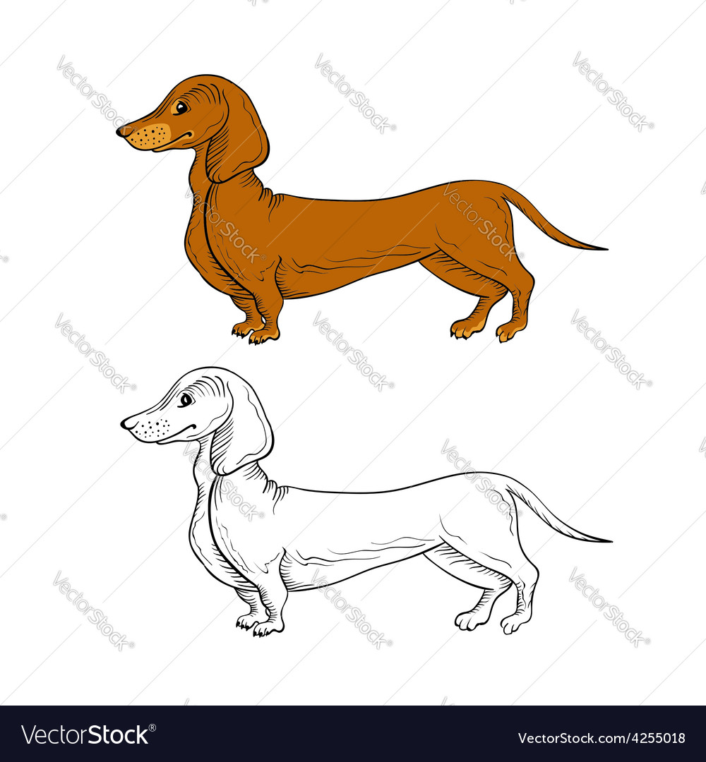 Two isolated dachshund dogs vector | Price: 1 Credit (USD $1)