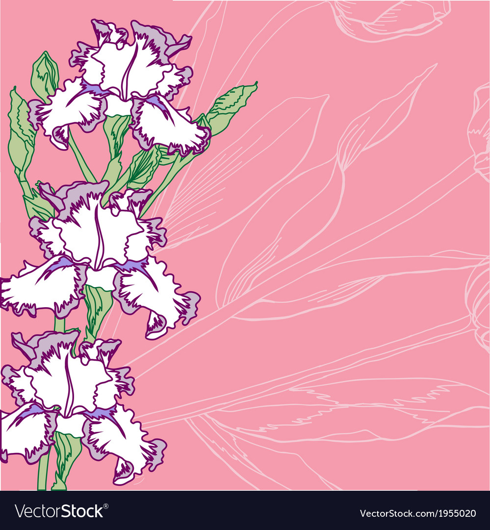 Pink background with irises vector   Price: 1 Credit (USD $1)