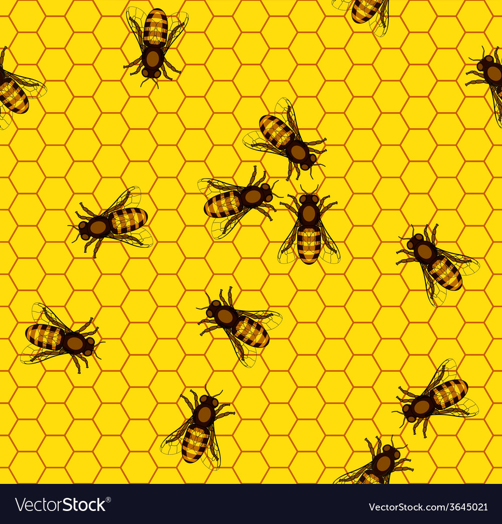 Bee on honeycomb pattern vector | Price: 1 Credit (USD $1)