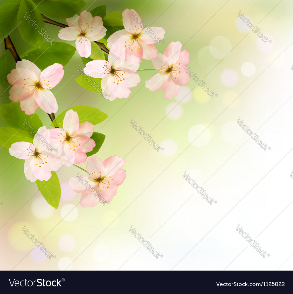 Spring background with blossoming tree brunch with vector | Price: 1 Credit (USD $1)