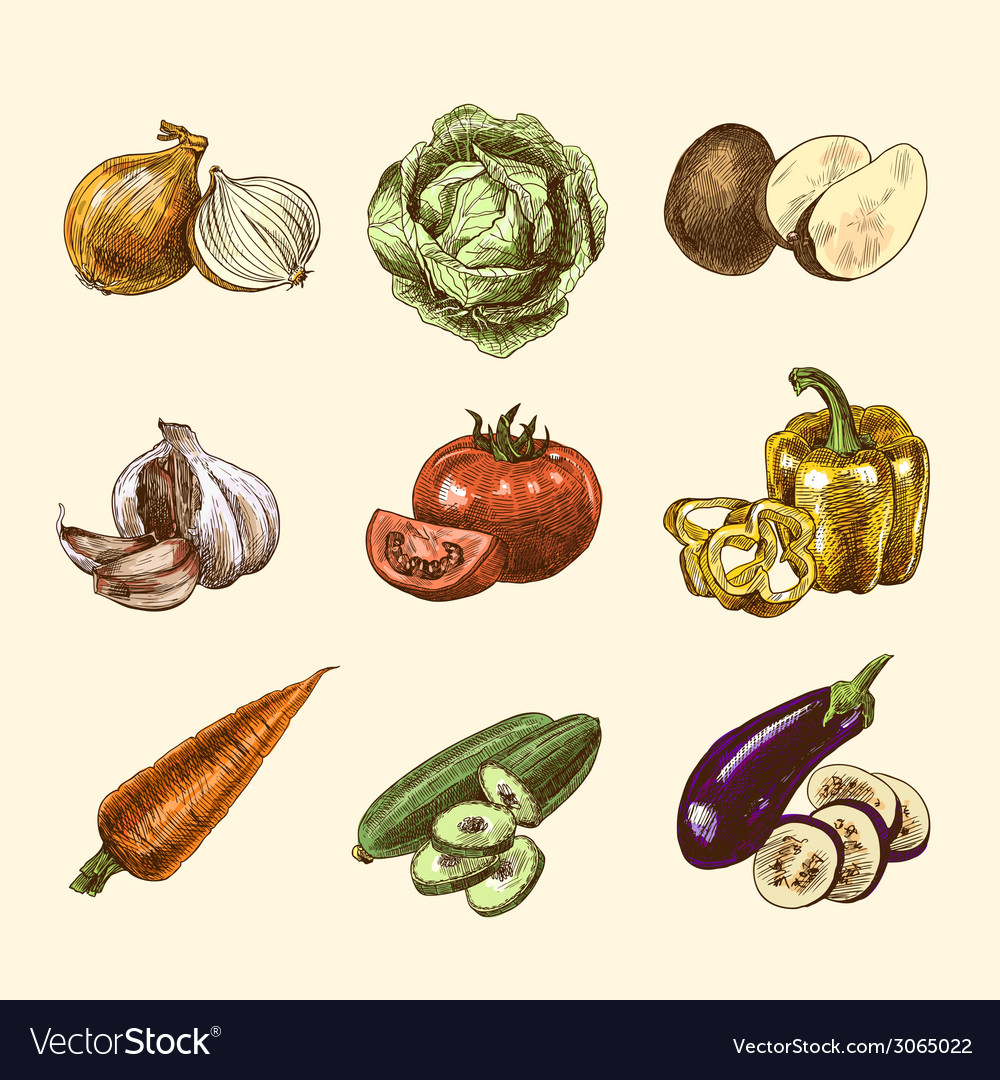Vegetables sketch set color vector | Price: 1 Credit (USD $1)
