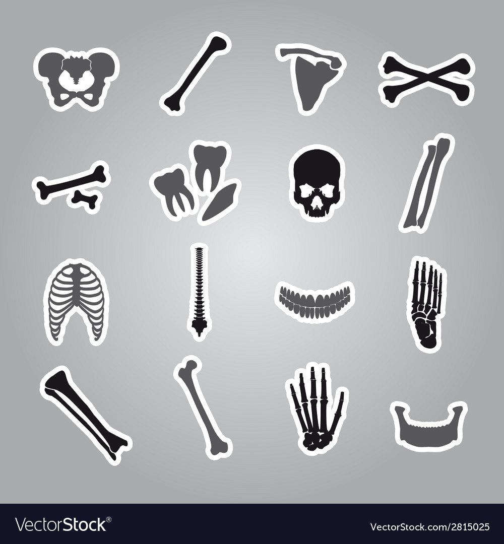 Human bones stickers set eps10 vector | Price: 1 Credit (USD $1)