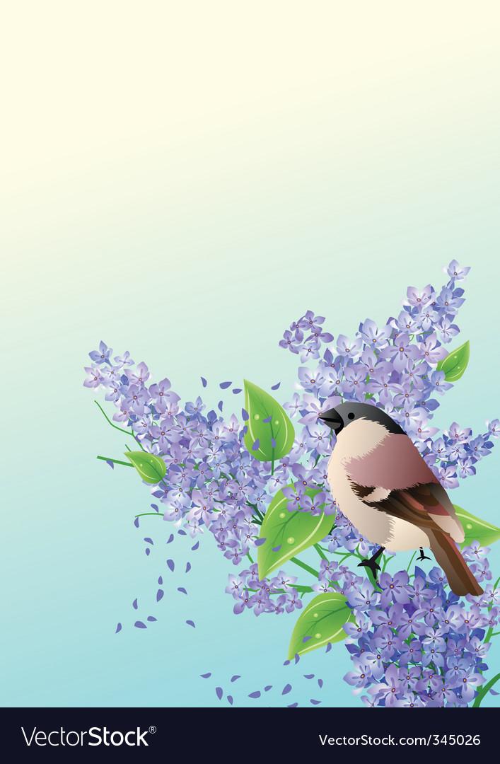 Sparrow vector | Price: 1 Credit (USD $1)