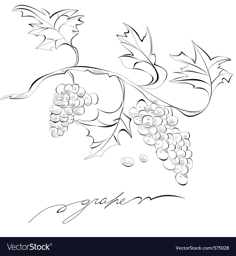 Sketch of grapes monochrome vector | Price: 1 Credit (USD $1)