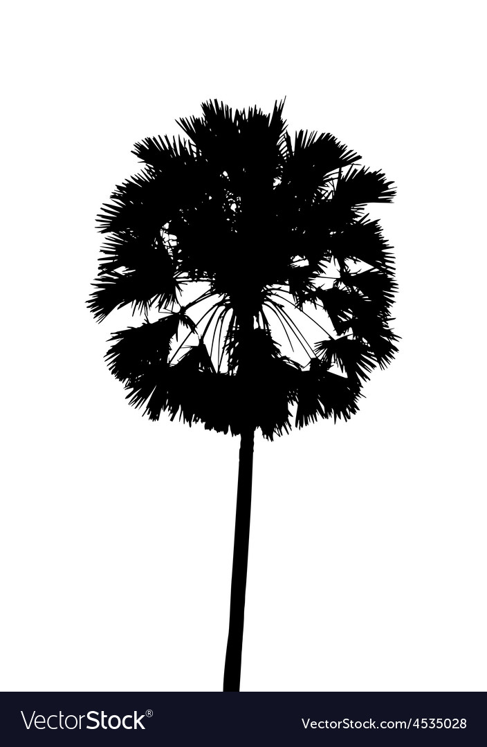 With single palm tree isolated on white background vector | Price: 1 Credit (USD $1)