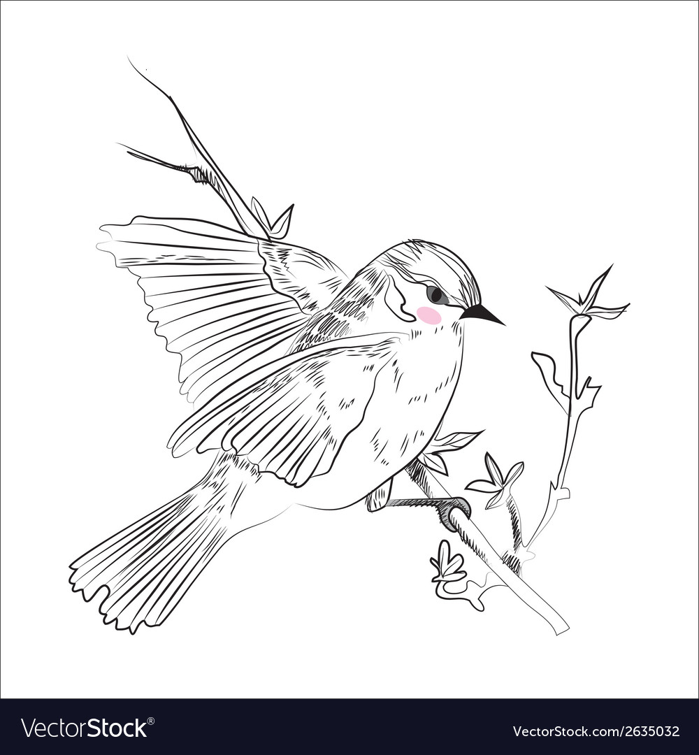Birdsketch vector | Price: 1 Credit (USD $1)