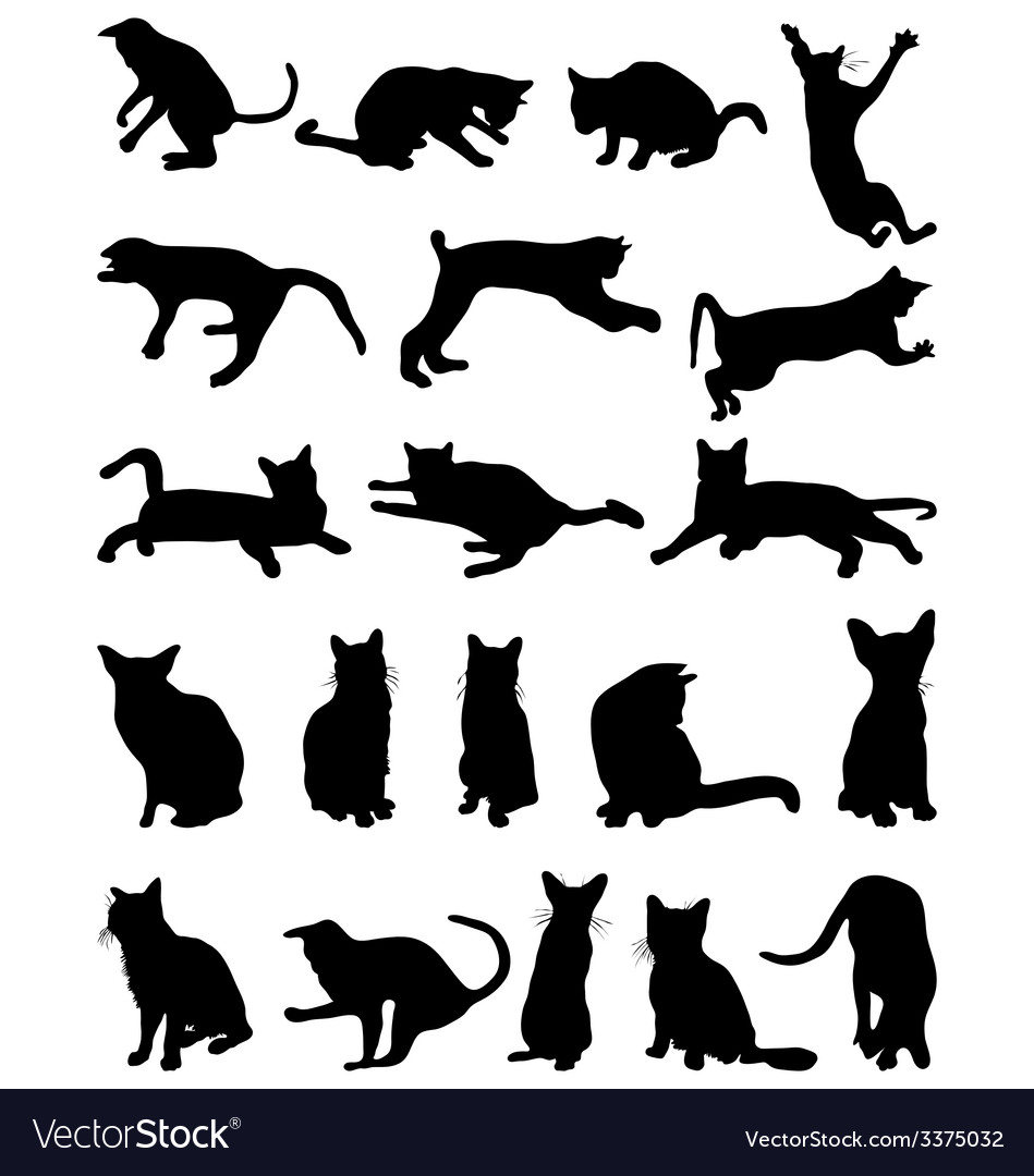 Cats 2 vector   Price: 1 Credit (USD $1)