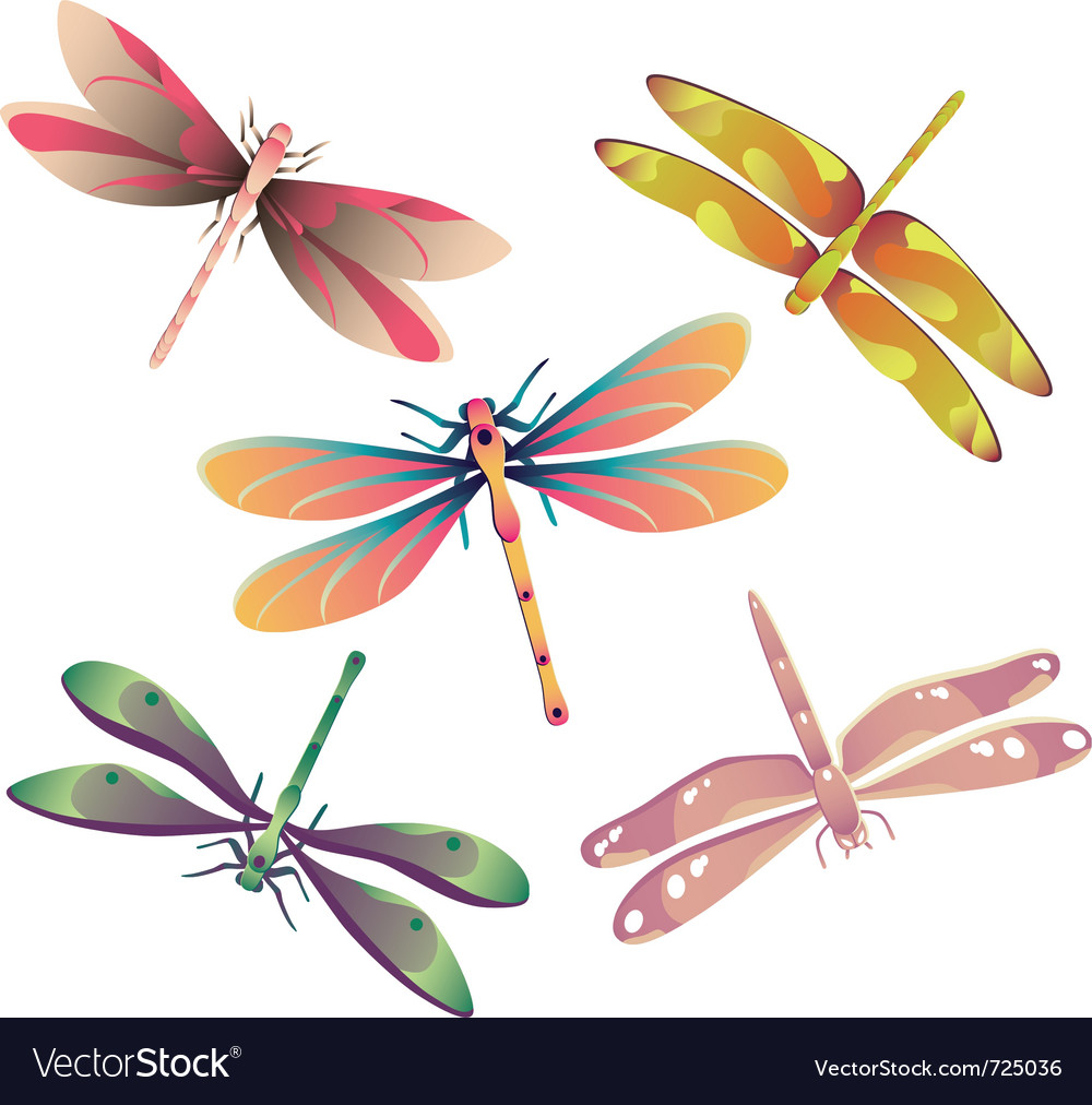 Dragonflies vector | Price: 1 Credit (USD $1)