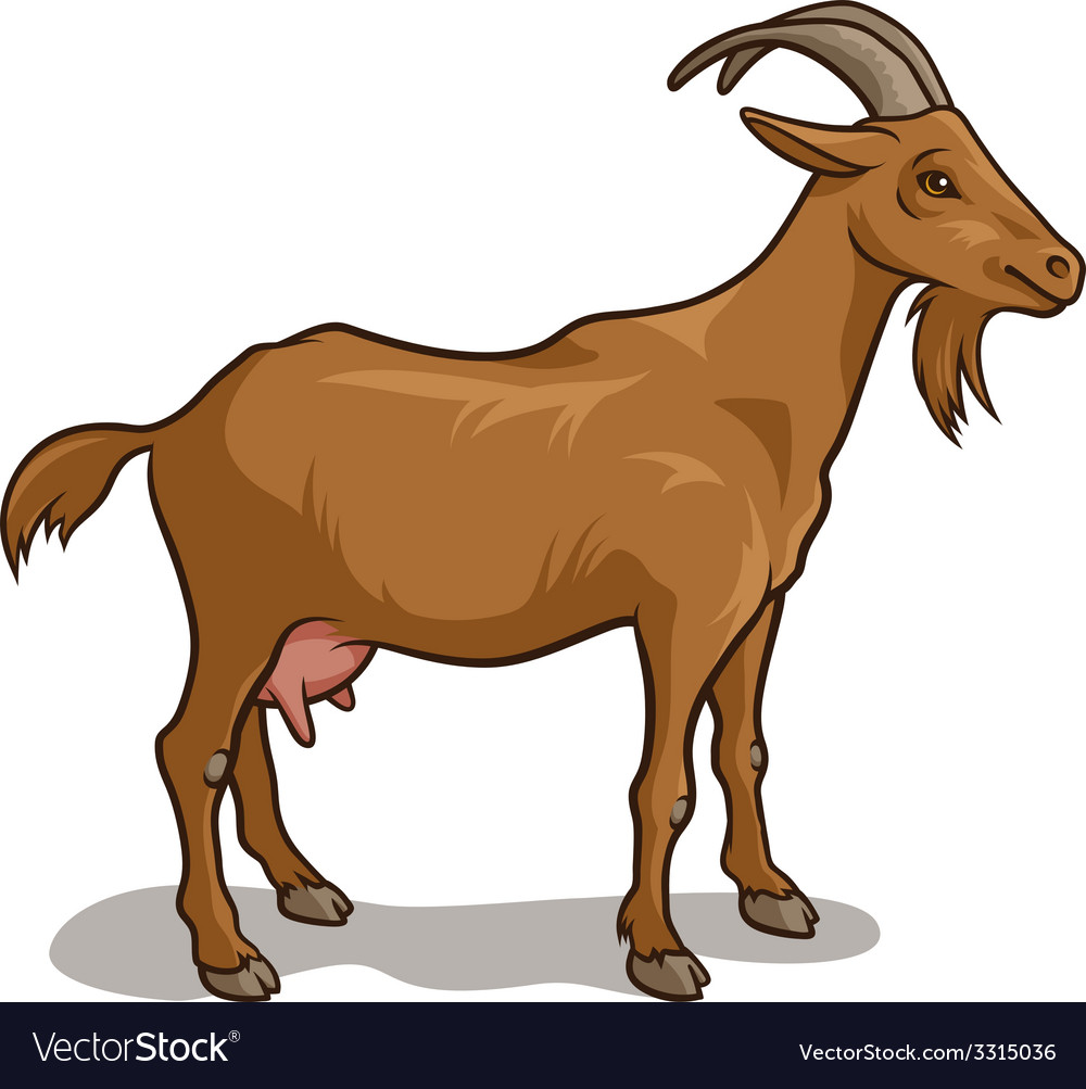 Goat vector | Price: 3 Credit (USD $3)