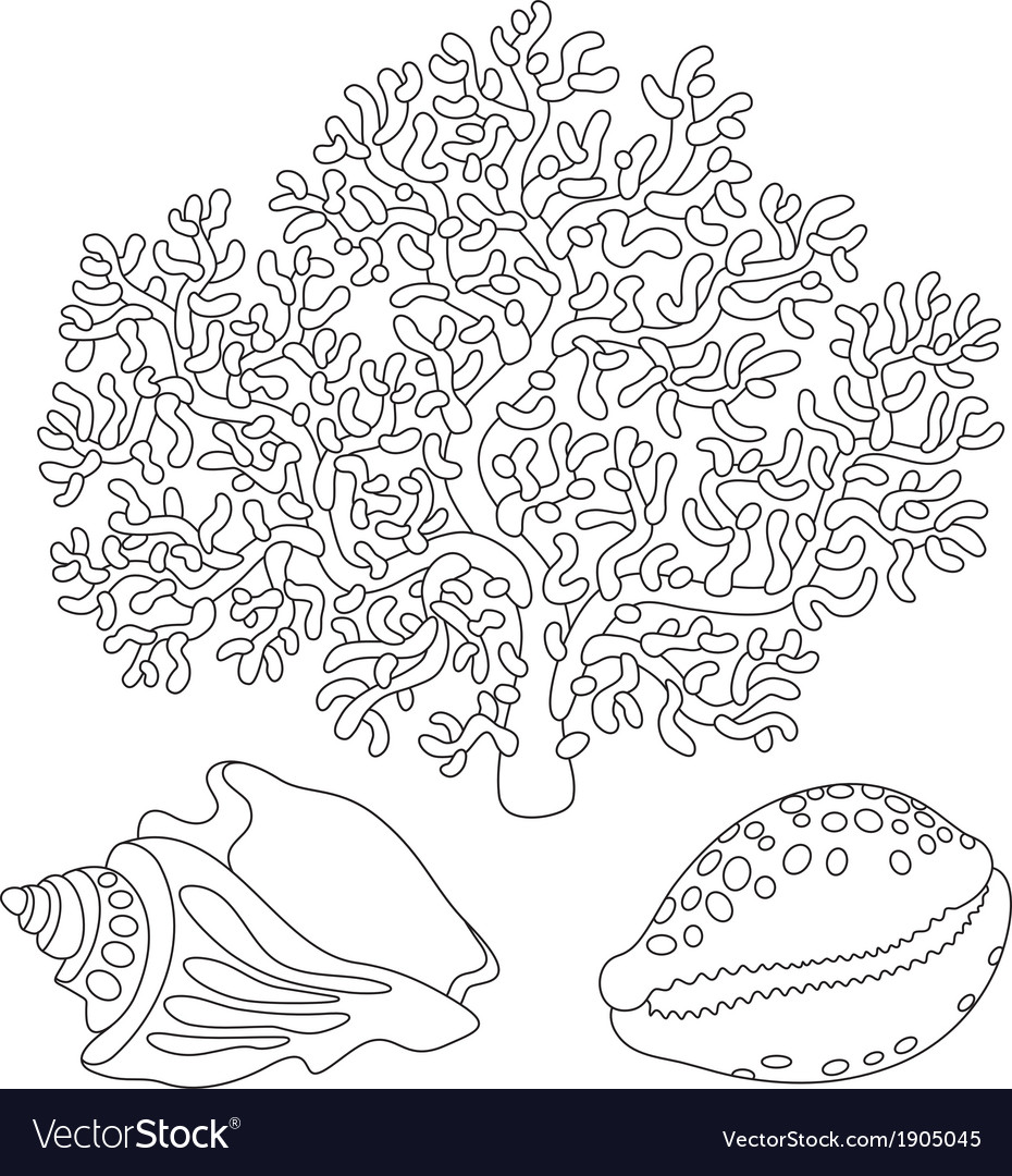 Coral and shells vector | Price: 1 Credit (USD $1)