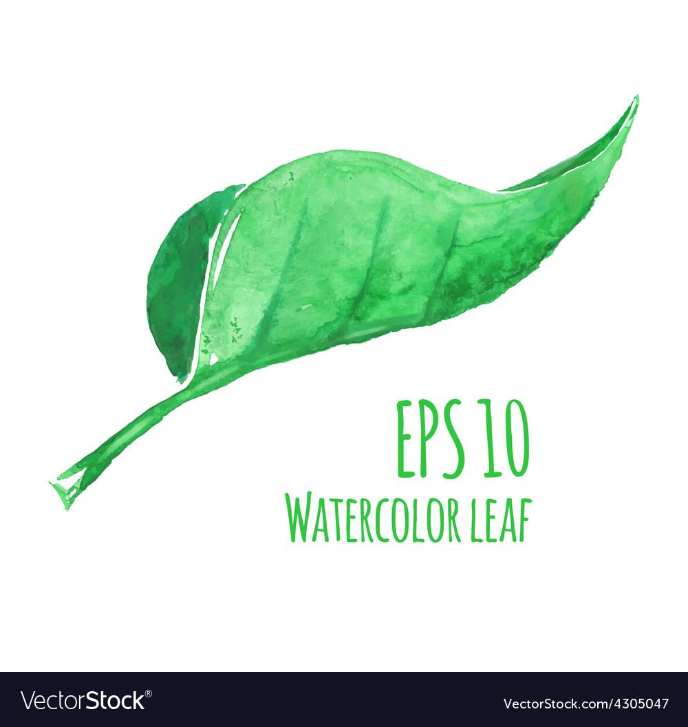 Watercolor leaf vector | Price: 1 Credit (USD $1)