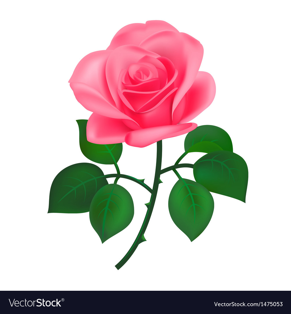 Beautiful rose vector