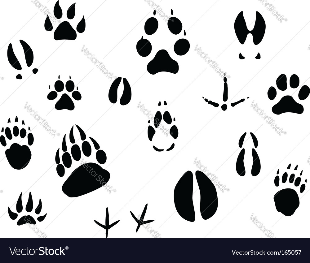 Animal footprints vector | Price: 1 Credit (USD $1)
